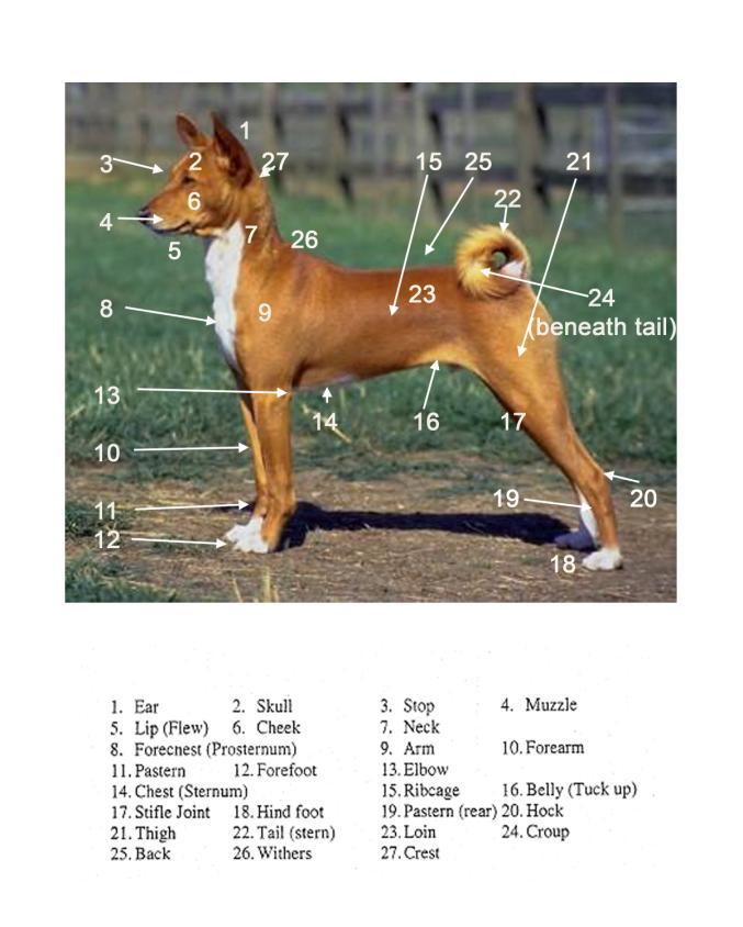 Basic Dog Grooming Class Handout